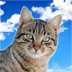 gato-profine