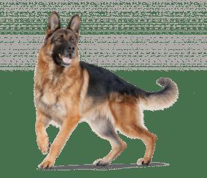 perro-portada
