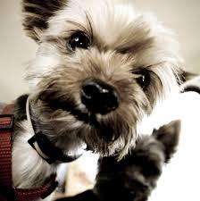Perro con flatulencia