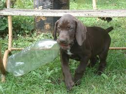 perro hiperactivo