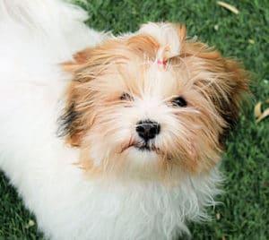 Cortar el pelo a mi perro