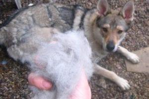 tips-muda-pelo-perro