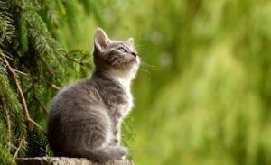 Gatos esterilizados – Pienso Profine
