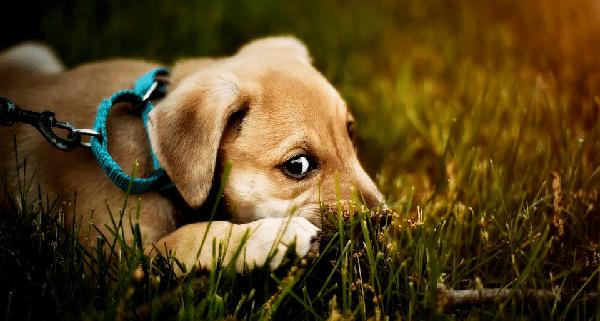 Correa perro