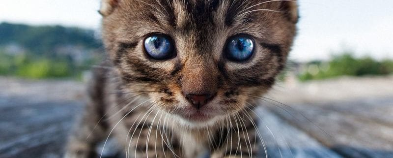 pienso para gatos