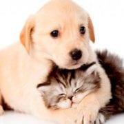 perro gato vacunas