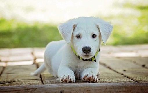 Pasear-perro