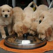 alimentación cachorro 001