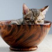 Cuidado Los peores alimentos para la salud de tu gato