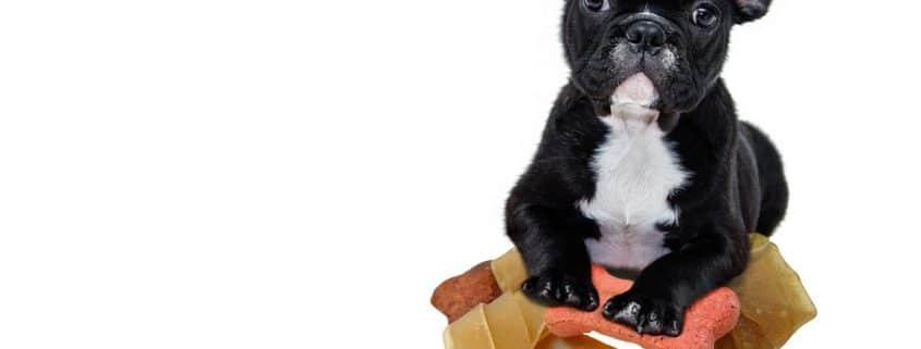 snacks para perros 001