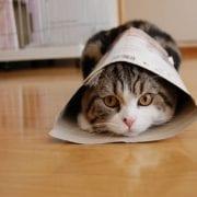 comprar pìenso gatos