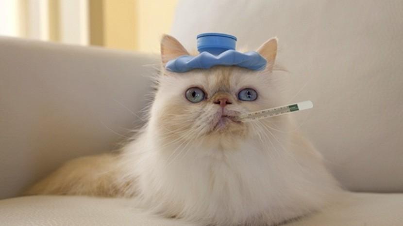 gato con gripe