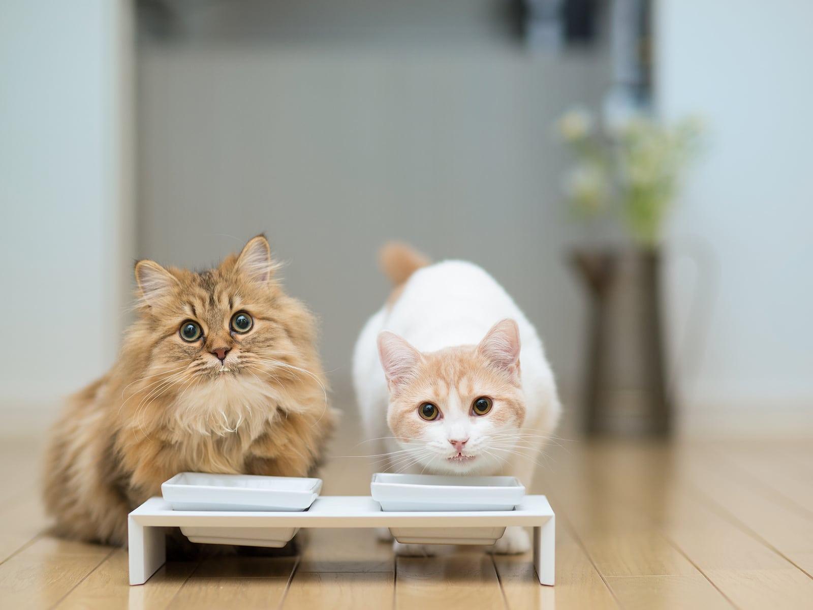 comprar pienso para gatos