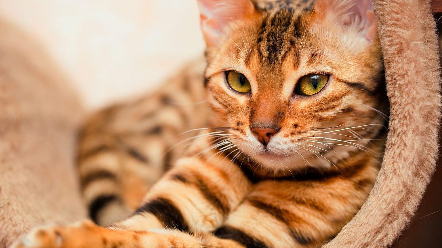 gato piel pienso