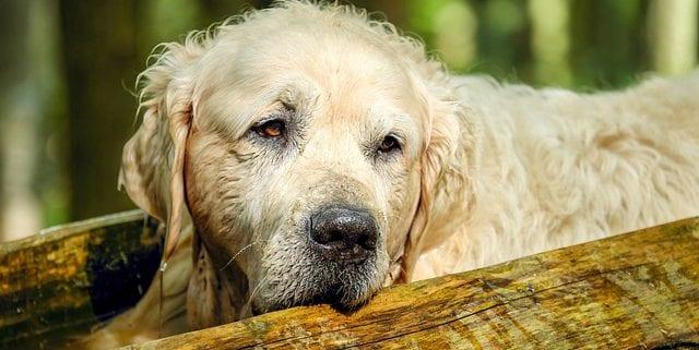 perros seniors 001