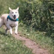 Cómo se pone a dieta a un perro
