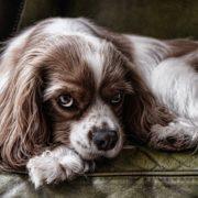 Cómo crear una dieta adecuada para tu perro
