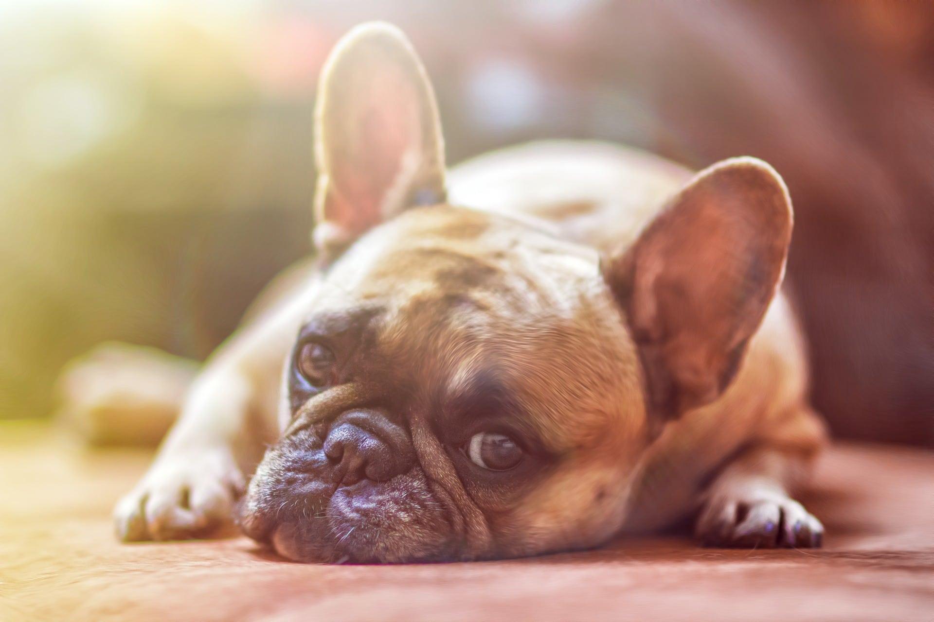 Consejos para cuidar la alimentación de tu mascota durante el verano