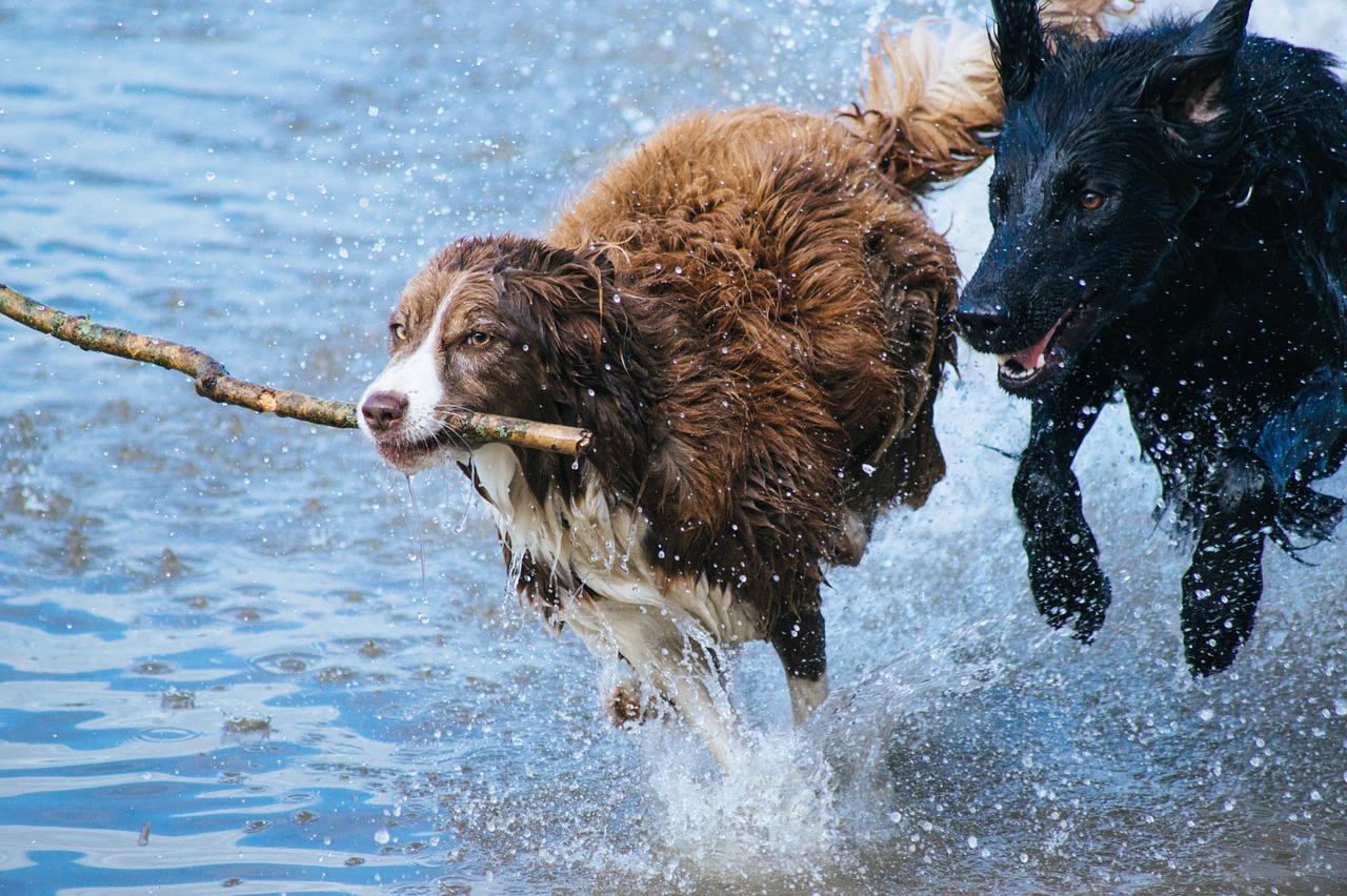 Los beneficios de jugar con tu perro y su importancia