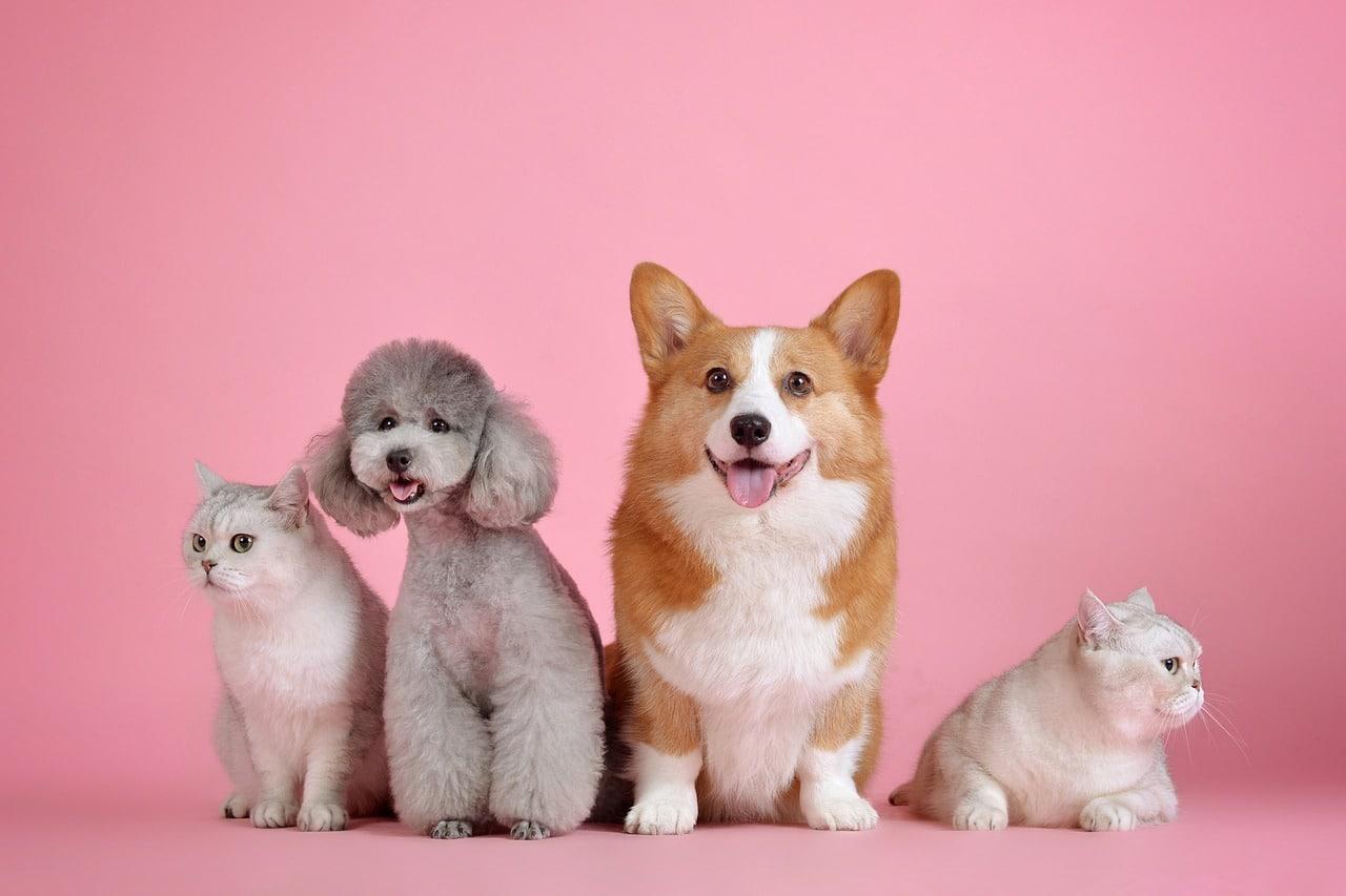 Mitos y verdades en la alimentación de perros y gatos