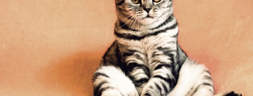 Los productos Profine diseñados para gatos esterilizados