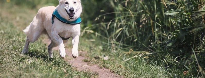 ejercicios perro