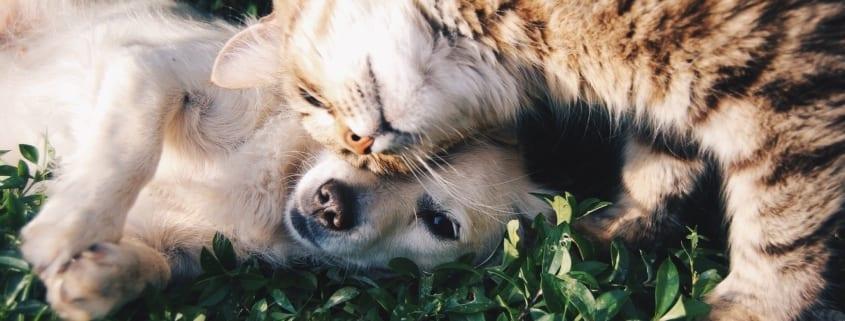 Las mascotas no contagian el coronavirus, ¡no los abandones