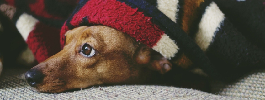 Todo lo que debes saber al comprar camas para tu mascota