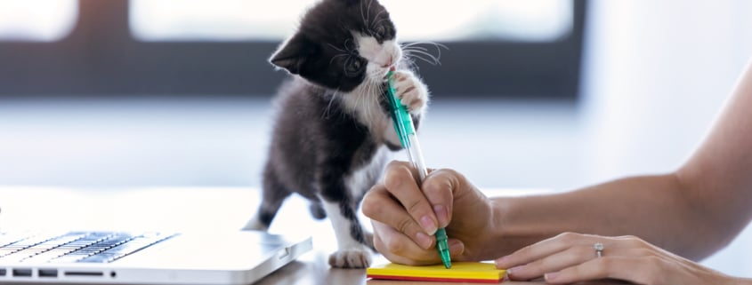 A pretty little cat biting the tip of a pen while its owner writes a note with him.