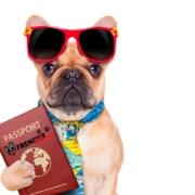 viajar con una mascota