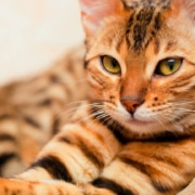 comprar comida para gatos online