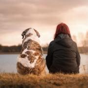 Cómo ayudar a adelgazar a tu mascota