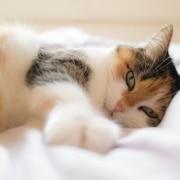 La piel y el pelo de tu gato son muy sensibles y necesitan una buena cantidad de nutrientes para mantenerse sanos y bonitos. Por eso, es esencial elegir un pienso completo que le aporte todo lo que necesitan.