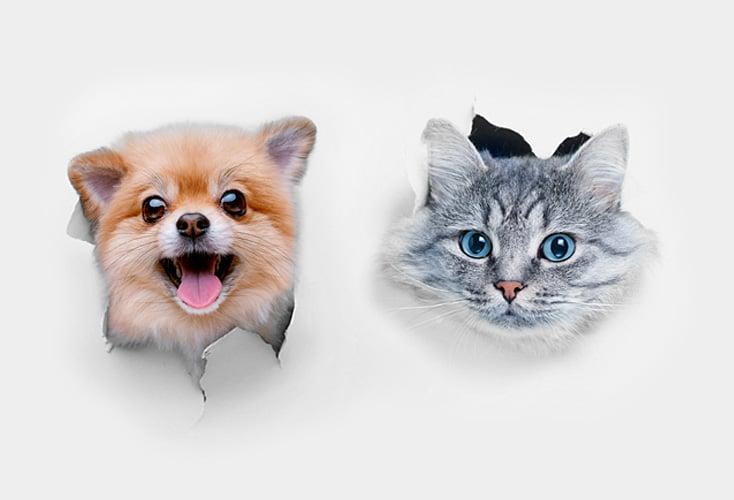 Perro y gato asomando cabeza en Pienso PROFINE